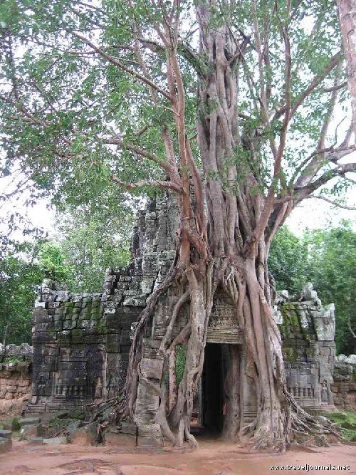 Les racines des arbres sont elles dangereuses pour vos - Arbre a faible racine ...