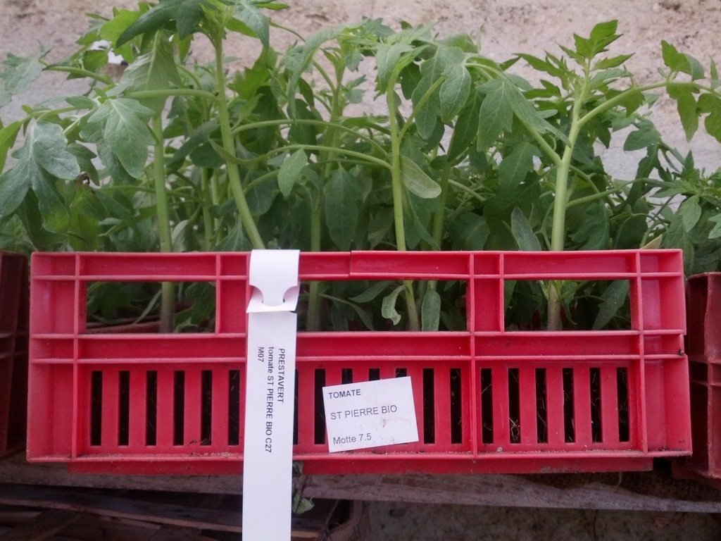 motte_légumes-prestavert